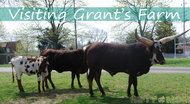 Grant's Farm Review