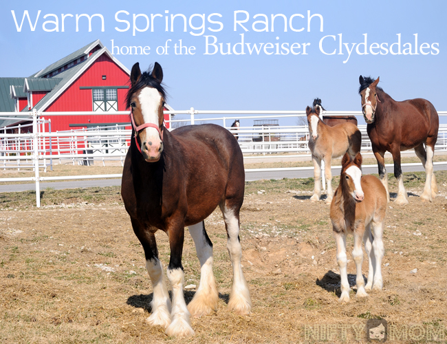 Warm Springs Ranch Review