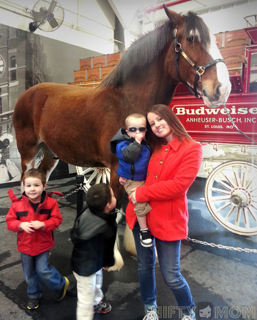 Photo Opp with Budweiser Clydesdales at Warm Springs Ranch