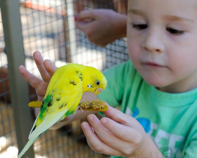 Grant's Farm Parakeet Feeding