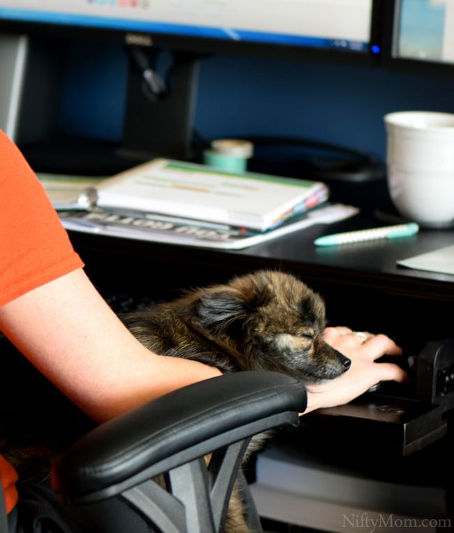 Ellie Resting #CesarHomeDelights