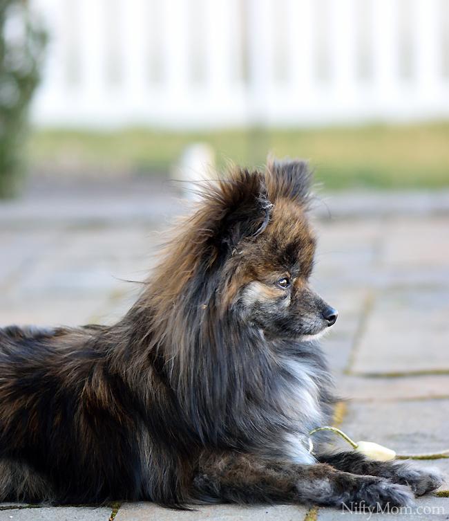 Ellie Enjoying Fresh Air #CesarHomeDelights