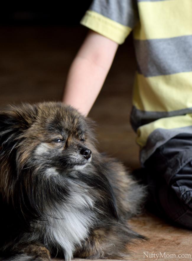 Pomeranian Mix #CesarHomeDelights