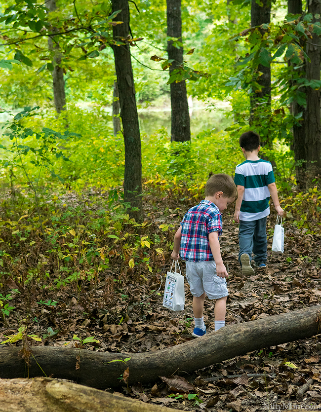 Family Fall Traditions - Nature Walk Collections + Printable Activity Sheet