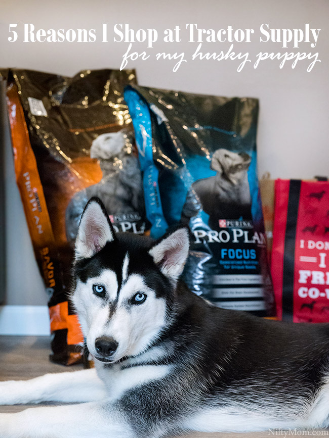 5 Reasons I Shop at Tractor Supply for Pet Supplies